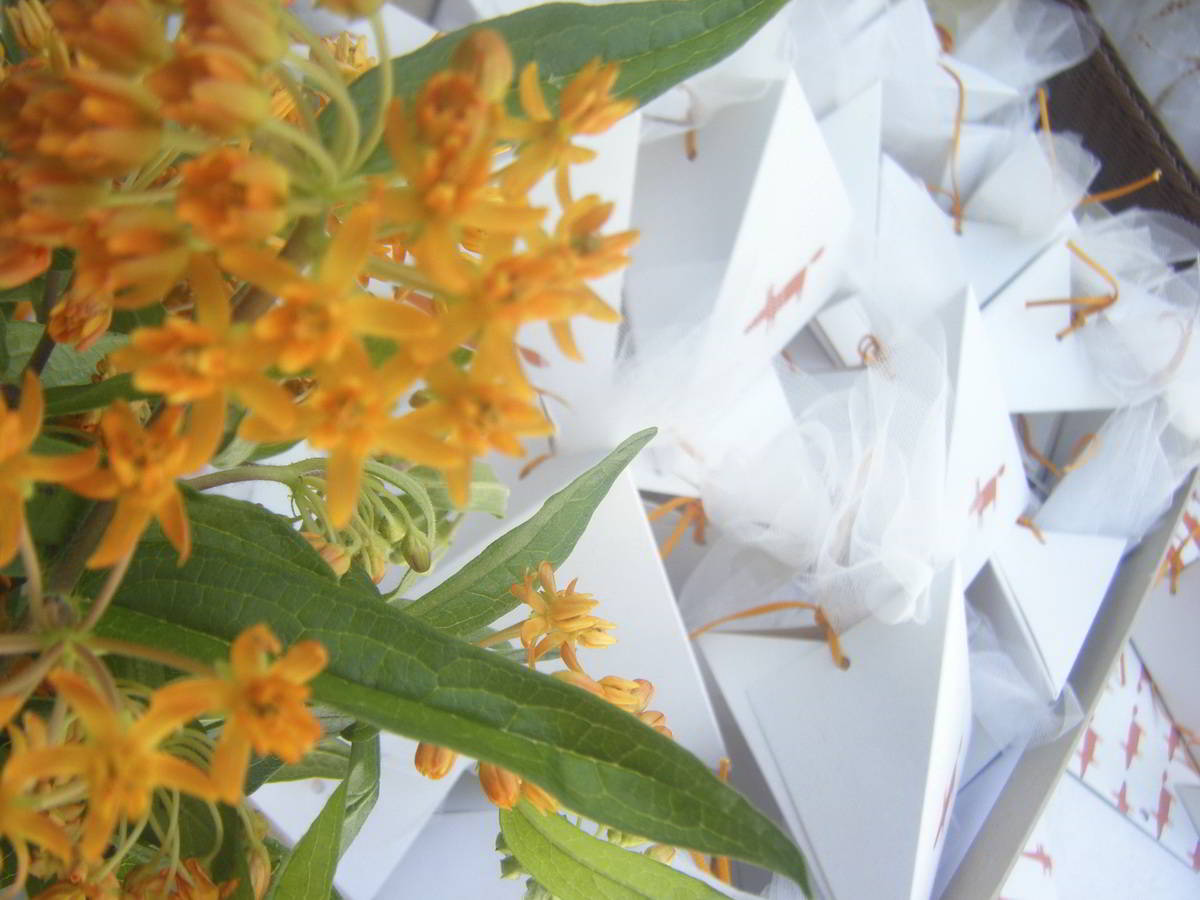 baptism_the-orange-fox_hara-kontaxaki_15